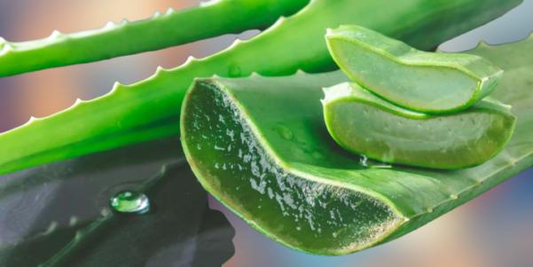 huile essentielles aloe vera pour trouble de l'erection